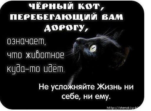 4121583_avmsami (513x376, 74Kb)