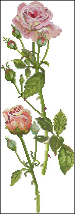 fujico-pink-rose (246x700, 119Kb)