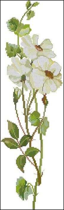 fujico-white-rose (216x700, 53Kb)