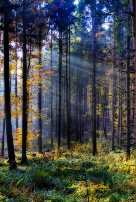 Fairy-Forest-on-Nov-1-in-Schwarzwald (470x700, 443Kb)