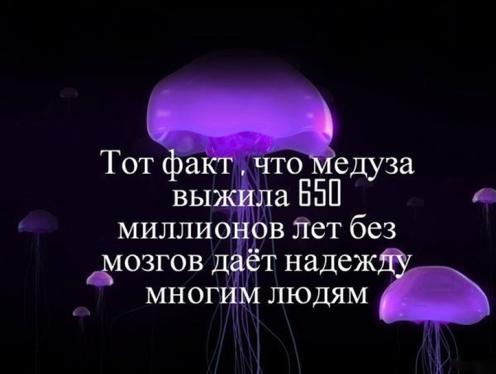 2979159_medyza (496x374, 224Kb)