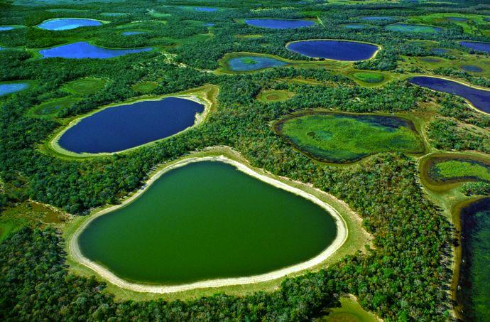 болото пантанал бразилия 2 (690x453, 454Kb)