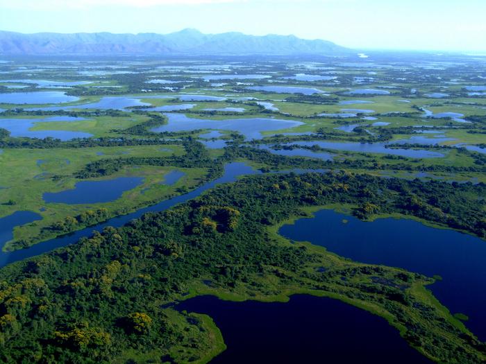 болото пантанал бразилия 15 (700x525, 528Kb)