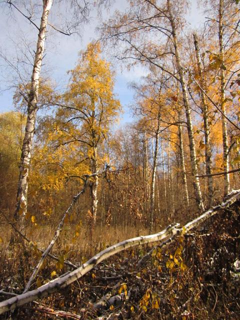 10 Осенний мороз (480x640, 495Kb)