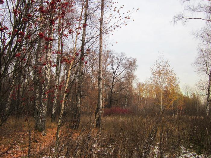 16 Осенний мороз (700x525, 537Kb)