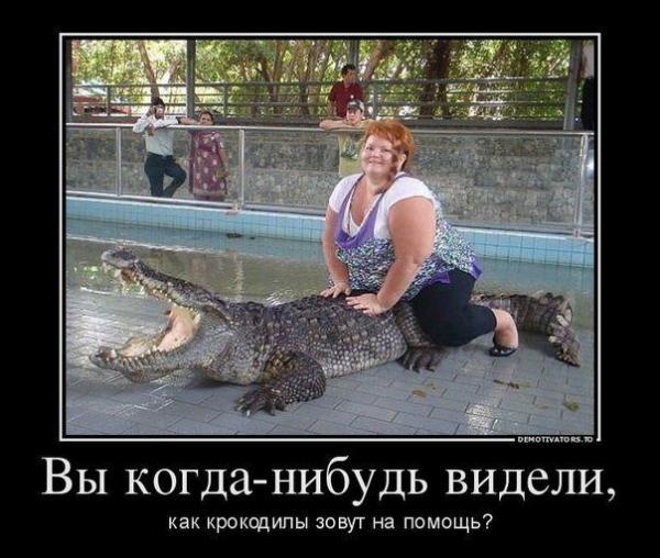 smeshnie_kartinki_141420244021 (600x508, 201Kb)