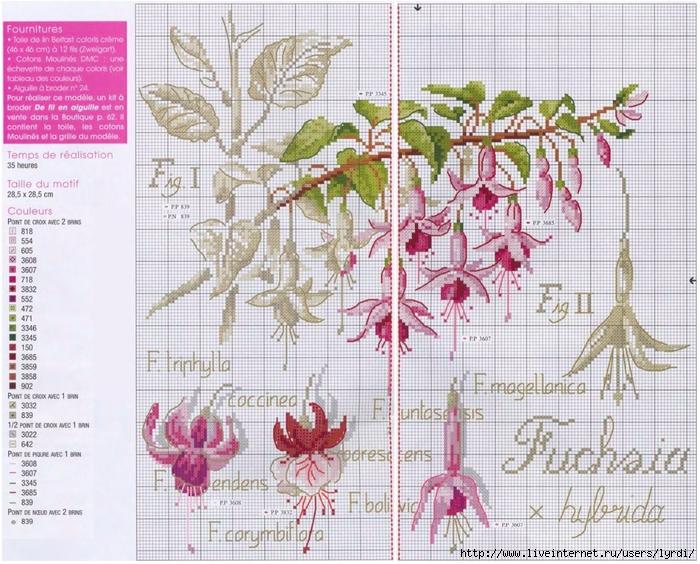 Вышивка крестом серия ботаника схема