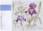 ������ Iris-2 (700x514, 297Kb)