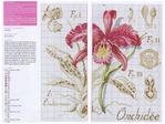 ������ Orhideya-2 (700x524, 329Kb)