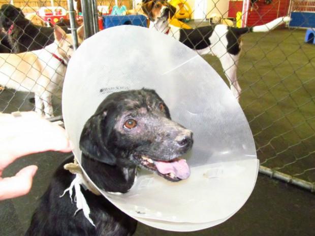 собака с аллергией на людей 3 (620x465, 240Kb)