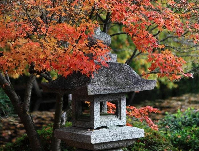 кленовые листья япония 1 (700x532, 364Kb)