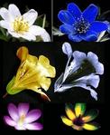 ������ ultraviolet-flowers (326x398, 118Kb)