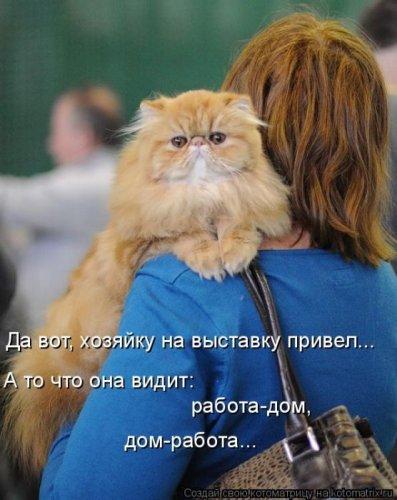 http://img0.liveinternet.ru/images/attach/c/11/117/66/117066112_1315527469_kotomatritsa9.jpg