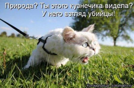 1411113021_kotomatr_05 (450x295, 39Kb)