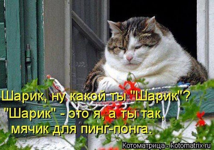 1412530481_4-www.radionetplus.ru (700x492, 217Kb)