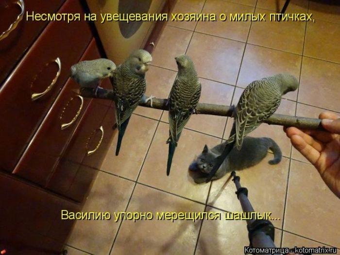 1412530483_26-www.radionetplus.ru (700x525, 184Kb)