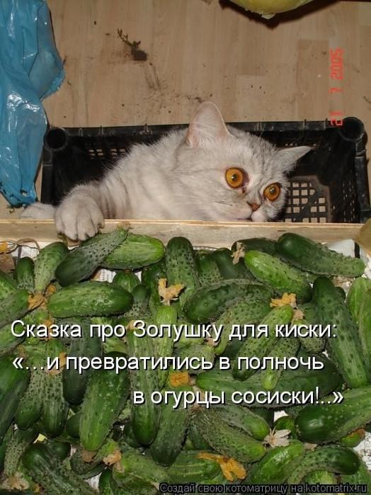 1412530566_18-www.radionetplus.ru (524x700, 283Kb)