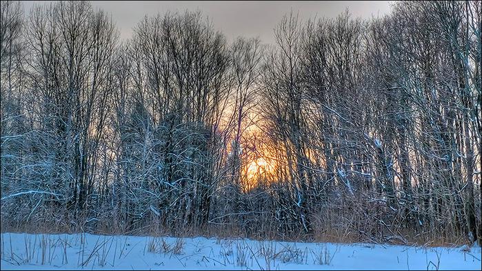 Вечер в зимнем лесу