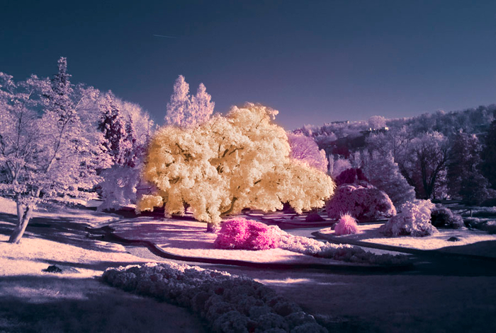 18-infrared-photography (700x471, 359Kb)
