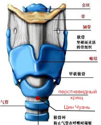 Цин Чуань-астма (352x434, 51Kb)