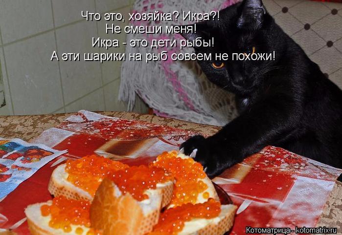 kotomatritsa___ (700x481, 363Kb)