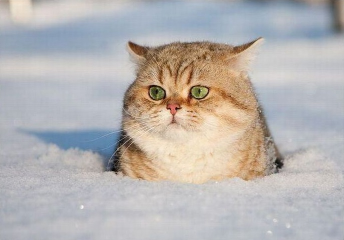 sad cat snow (688x479, 81Kb)
