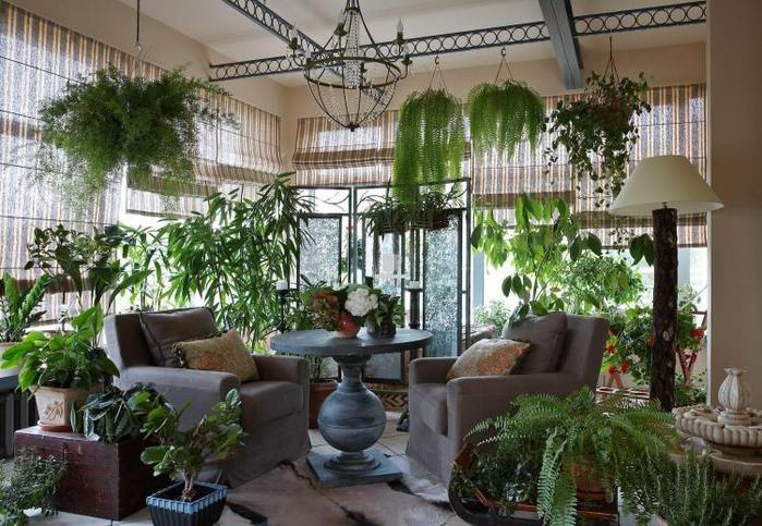 salon-super-plein-plantes-vertes-jardin-hiver-maison (700x483, 81Kb)
