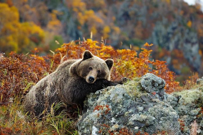 Медвежий рай (700x466, 439Kb)