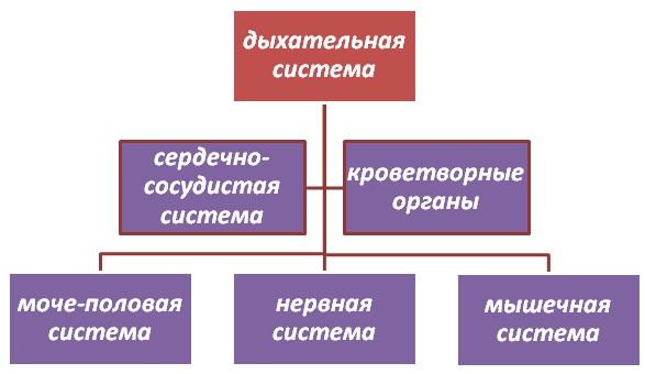 2835299_oslojneniya1 (587x340, 42Kb)