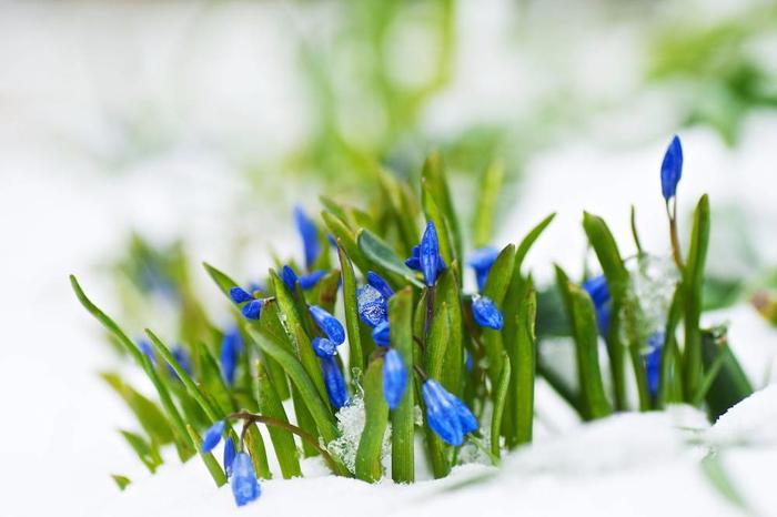 02_001_snowflower_nanagyei___xl (700x466, 252Kb)