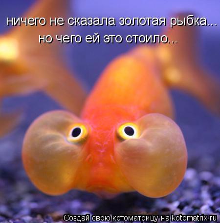 kotomatritsa__n (450x457, 169Kb)