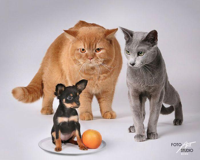 r2_www.catsmob.com_funny_animals_01167_032_f19a342a (700x559, 50Kb)