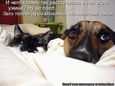 про кошек1 (400x300, 39Kb)