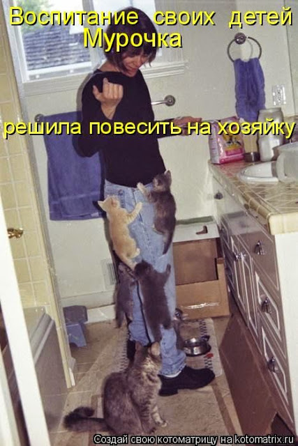 про кошек2 (427x640, 80Kb)