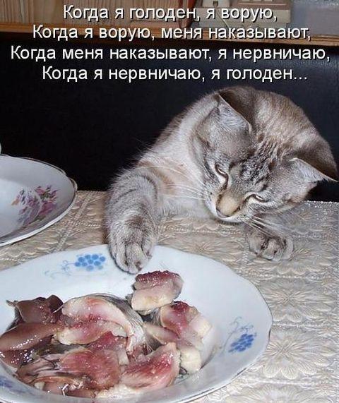 Голодный кот (480x571, 180Kb)