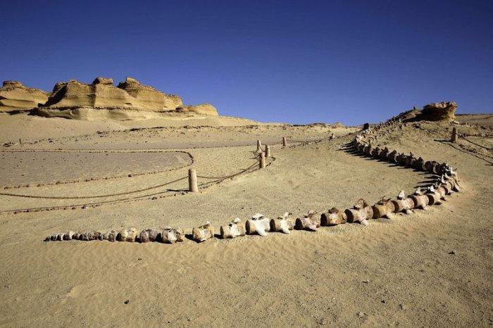 музей ископаемых животных в египете 2 (700x466, 257Kb)