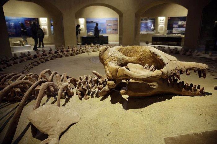 музей ископаемых животных в египете 4 (700x466, 271Kb)