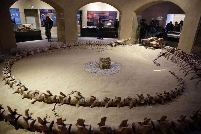 музей ископаемых животных в египете 6 (700x466, 252Kb)