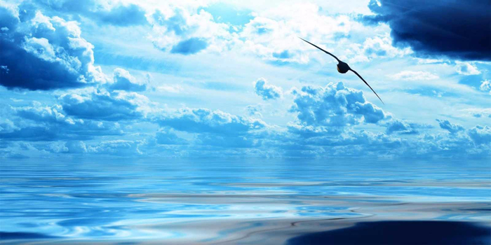 Bird-Ocean-1050x1680 (700x350, 269Kb)