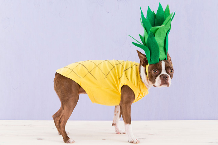 Halloween_Dogs_5Costumes_099 (700x466, 228Kb)