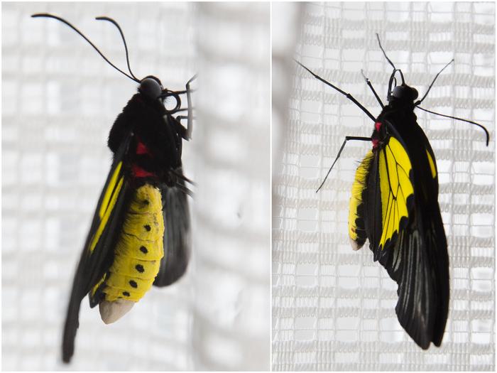 2016 01 Бабочки (700x525, 330Kb)