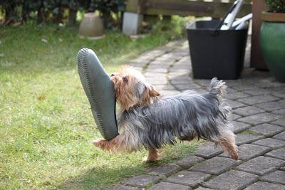 картинка с собакой (400x267, 45Kb)