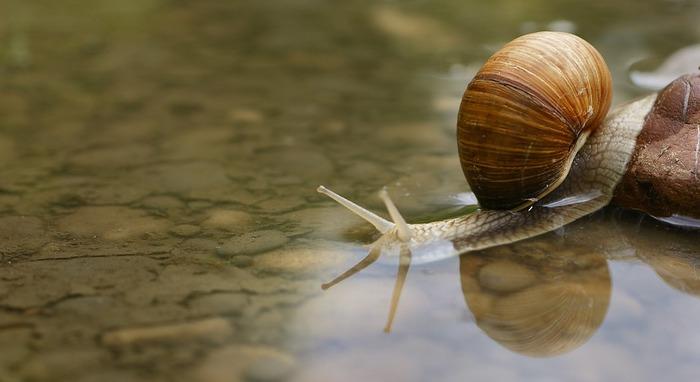 snail-187559_960_720 (700x382, 52Kb)