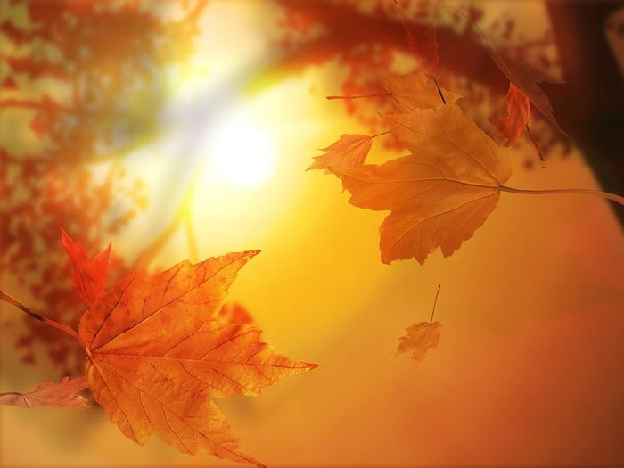 Nature___Seasons___Autumn_Sunny_Golden_autumn_108458_ (700x525, 73Kb)