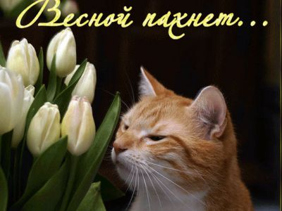 5053532_Vesnoi_pahnet (400x300, 21Kb)