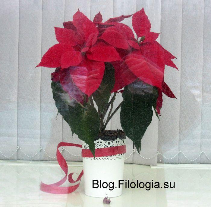 Красивые красные цветы в витрине магазина/3241858_red110 (700x689, 71Kb)