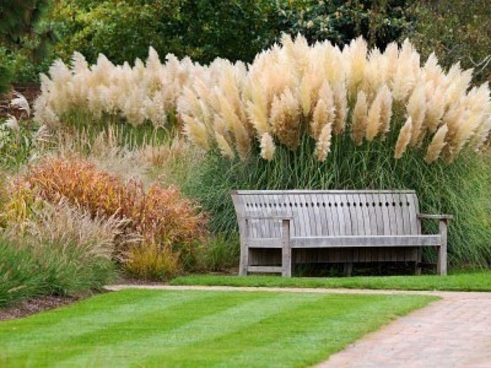 пампасная трава 12 (700x525, 406Kb)