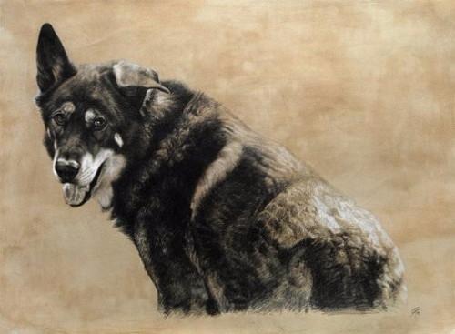 Realistic-animal-drawing-by-Romanian-artist-Cristina-Penescu-16 (500x367, 136Kb)
