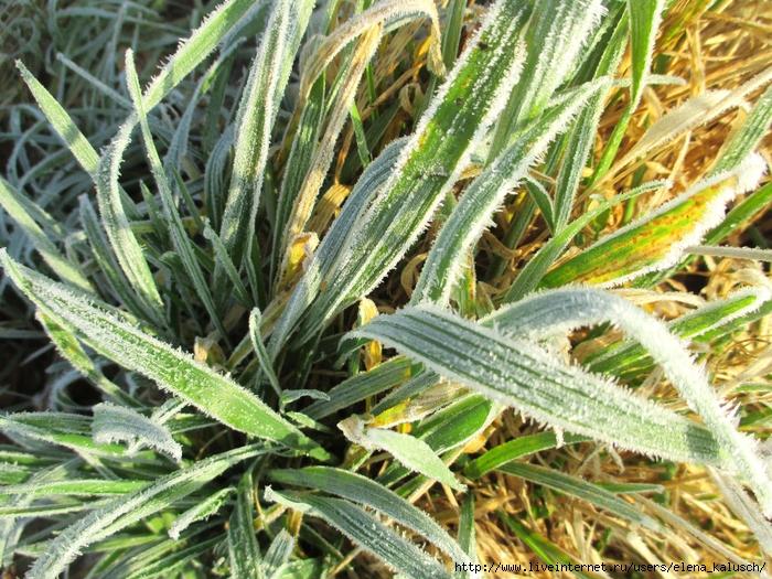 Februar Frost 009 (700x525, 431Kb)