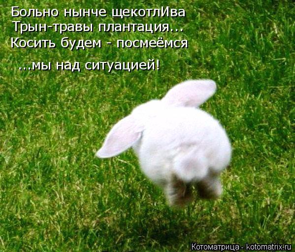 kotomatritsa_6T (599x512, 403Kb)